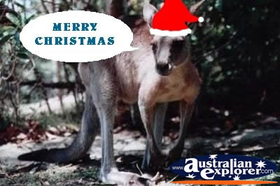 Kangaroo At Christmas Virtual Postcard Kangaroo At