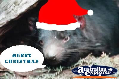 TASMANIAN DEVIL AT CHRISTMAS VIRTUAL POSTCARD TASMANIAN