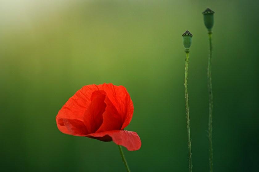 Centenary ofArmistice. Столетие перемирия