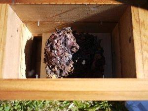 Brood-in-box