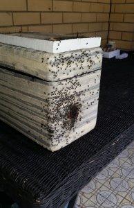 Fighting-swarm-