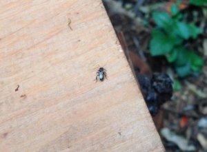Queen-bee-on-box-2