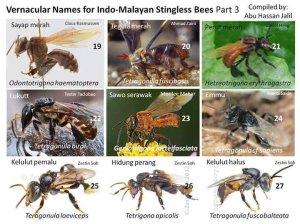 malaysia stingless bee