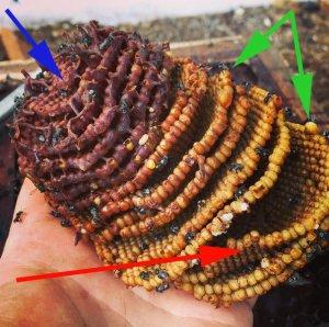 Native bee brood