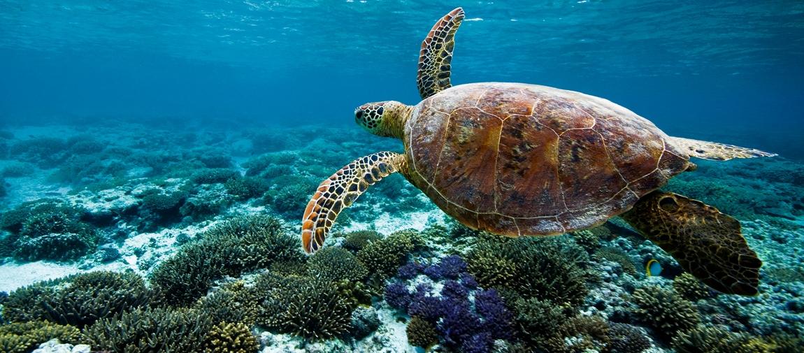 Tahiti Honeymoon Itinerary
