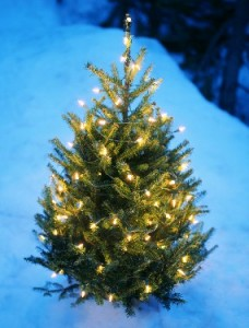 evergreen with lights