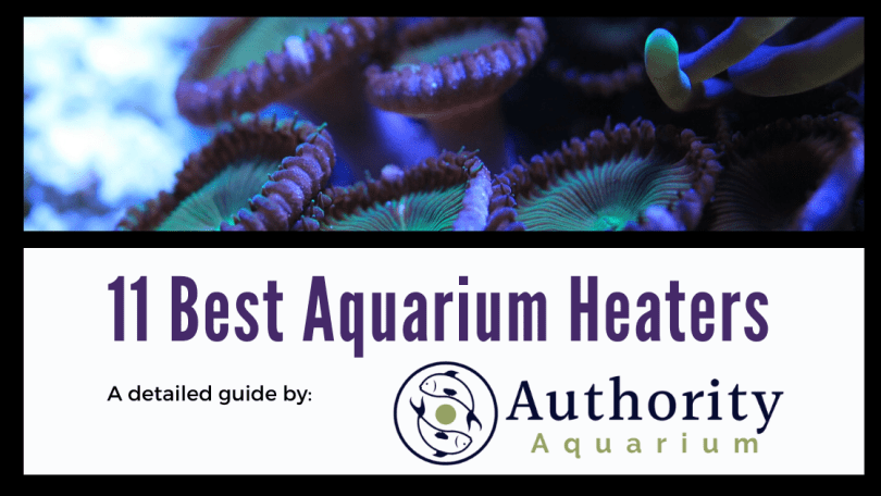 11 Best Aquarium Heaters