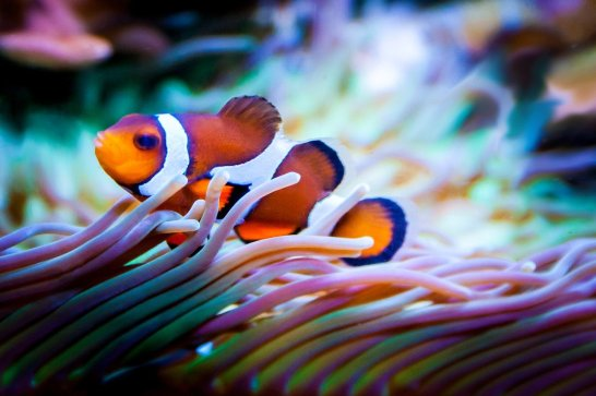 Clownfish-Questions When Buying Aquarium Fish