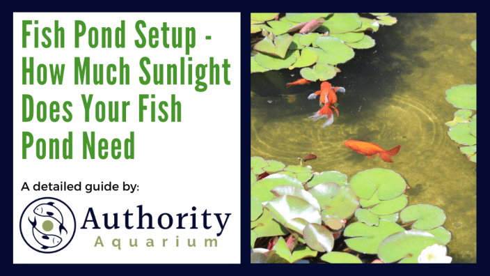 Fish Pond Setup - How Much Sunlight Does Your Fish Pond Need