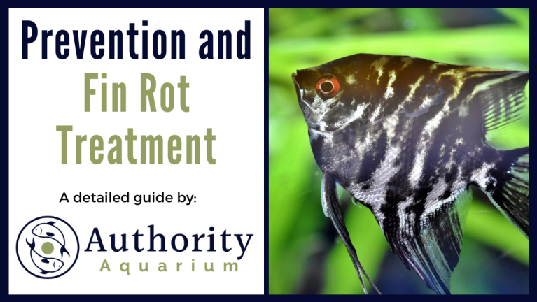 Prevention and Fin Rot Treatment