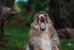 Screaming monkey - Thoughts on creating Realistic Fiction Despite Reader Distrust