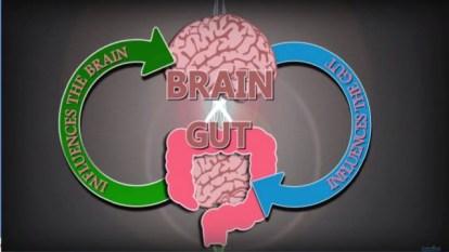 brain gut connections