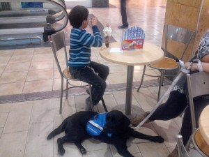 Perro de asistencia