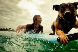 16 surfer avec son chien