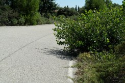piste ovale michelin vegetation 2