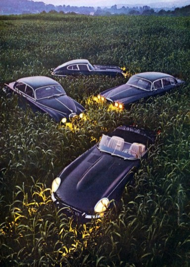 """1968 E-Type Coupe """"Cat in the Weeds"""""""