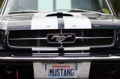 CP_EXt-Mustang-10