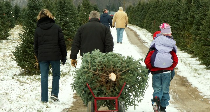 Christmas Tree Lots in Downers Grove IL