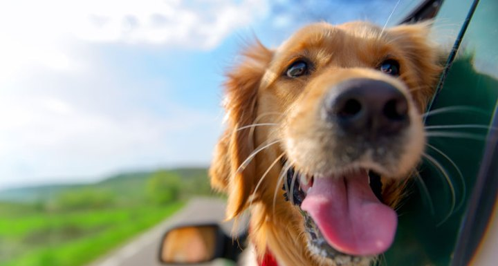 Tips to Keep Your Dog Safe in the Car