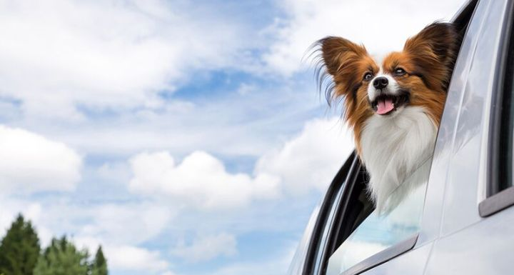 Driving Safety Tips for Your Dog