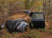 VW Käfer im Wald. Bildquelle: © ostrows1 - Fotolia.com