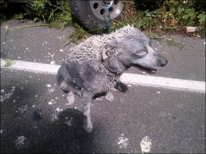 Crash leaves man and dog covered in paint (3)