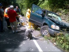 Crash leaves man and dog covered in paint (4)
