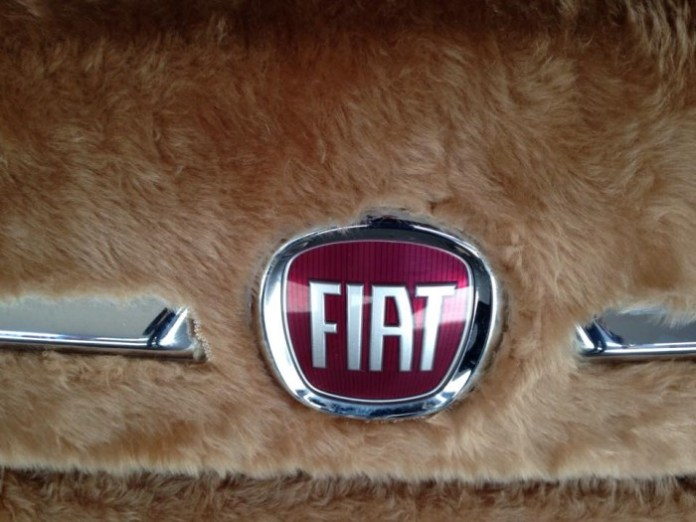 fiat-500-wrapped-in-fur-spotted-in-argentina-looks-like-a-labrador_3
