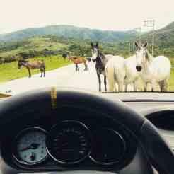 Cavalos na pista representam apenas um dos motivos se ter cautela na Estrada dos Romeiros