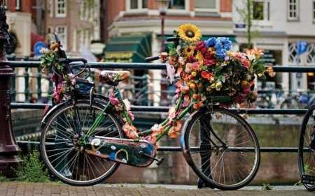 Holanda com