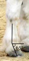 Quartela e canela (wikipedia)