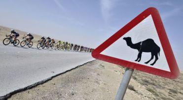 Grupo de ciclistas durante a quarta etapa do Tour do Qatar, em primeiro plano a placa que avisa travessia de camelos LIONEL BONAVENTURE/AFP/Getty Images)