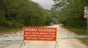 Na Ilha de Natal, na Austrália, a placa informa fechamento da estrada a veículos devido à migração anual caranguejos vermelhos (Minden Pictures/AP Images)