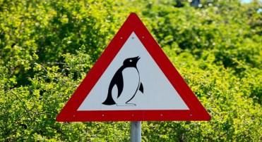 Aviso de perigo, pinguins na estrada – em Boulders Beach, na África do Sul (Minden Pictures/AP Images)