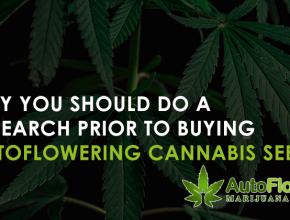 marijuana related activities