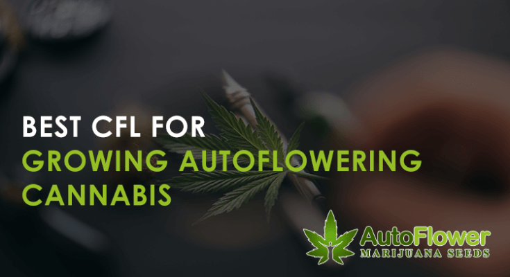 best cfl for autoflower plants