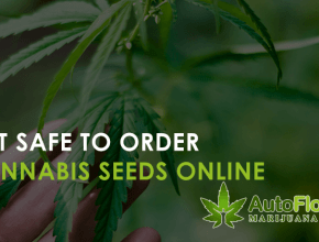 safe to order cannabis seeds