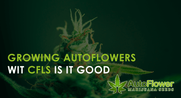 growing autoflowers with CFLs