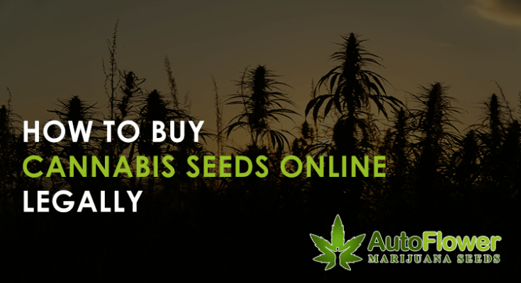 cannabis seeds online legally