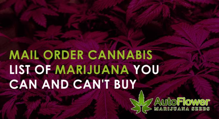 how to buy marijuana seeds online