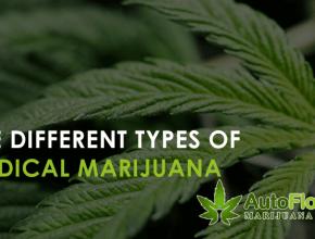 buy medical marijuana seeds