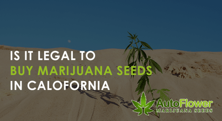 buy marijuana seeds in california