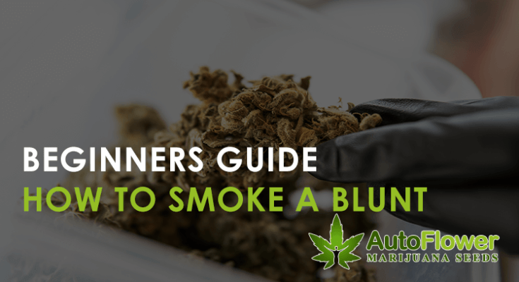 how to smoke a blunt