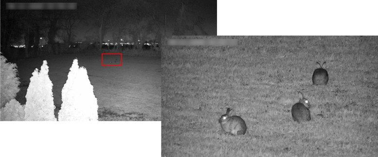 Hikvision CCTV - Rabbit Watching