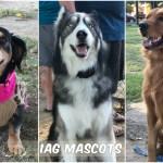 iag-mascots
