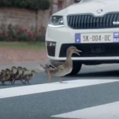 #SKODADrivers : A quoi reconnait-on les conducteurs de SKODA?