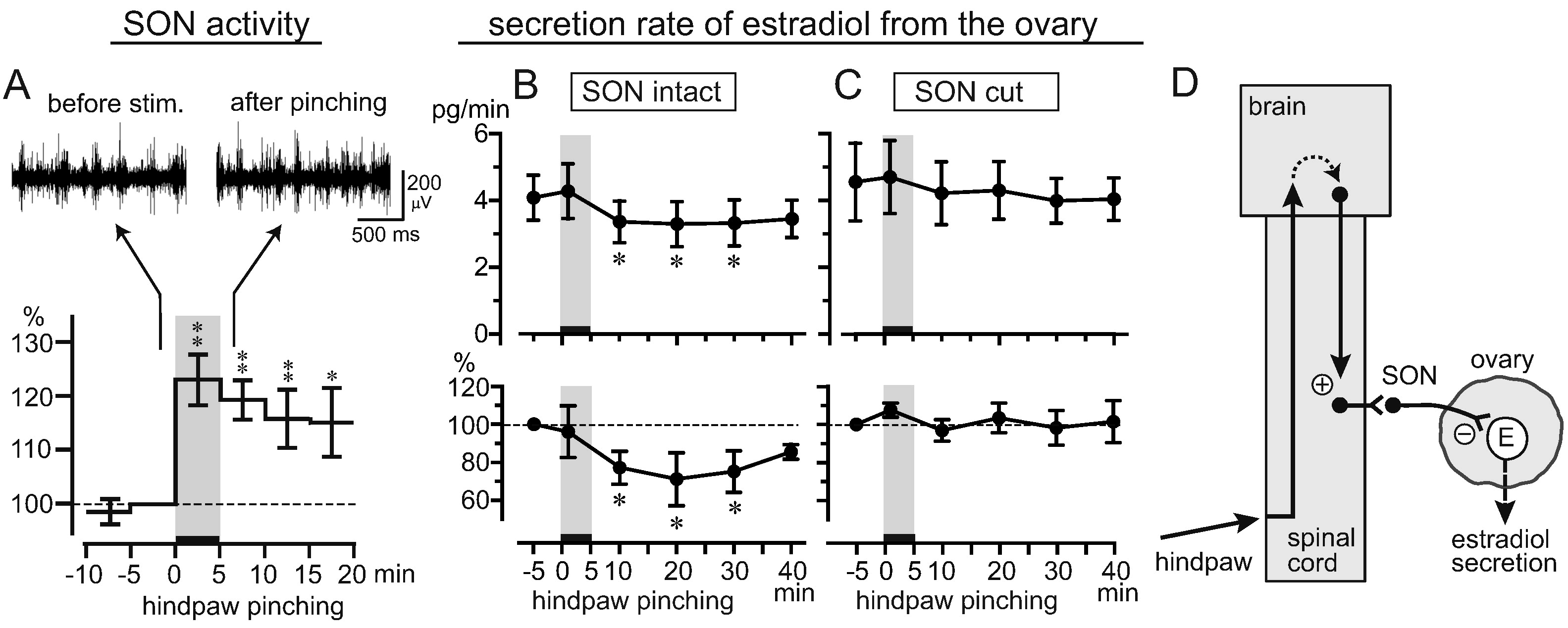 Sympathetic Regulation Of Estradiol Secretion From The