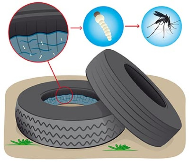 TNU mosquitos