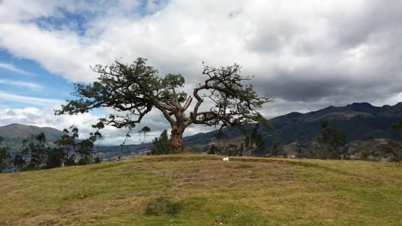 Le Lechero (près d'Otavalo)
