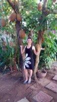 le fameux arbre à couilles , dans notre hôtel, notre petit paradis, le Sabaidee House